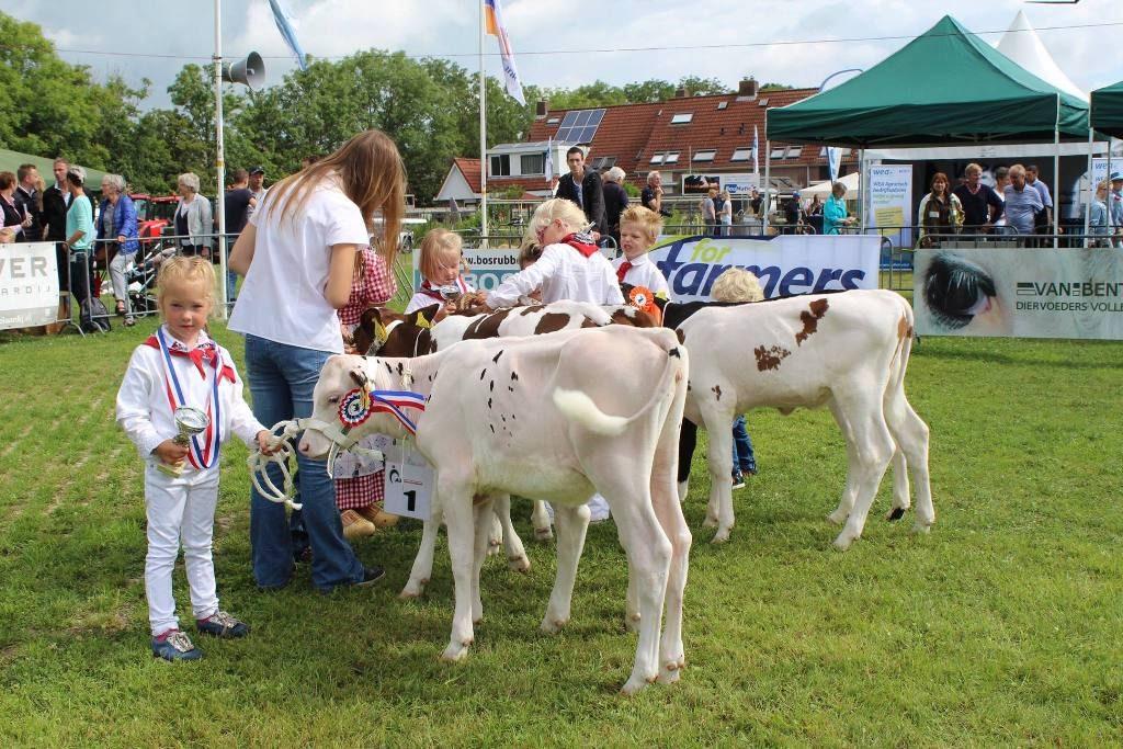 Kalverenkeuring tijdens de Landbouwshow Opmeer 2016